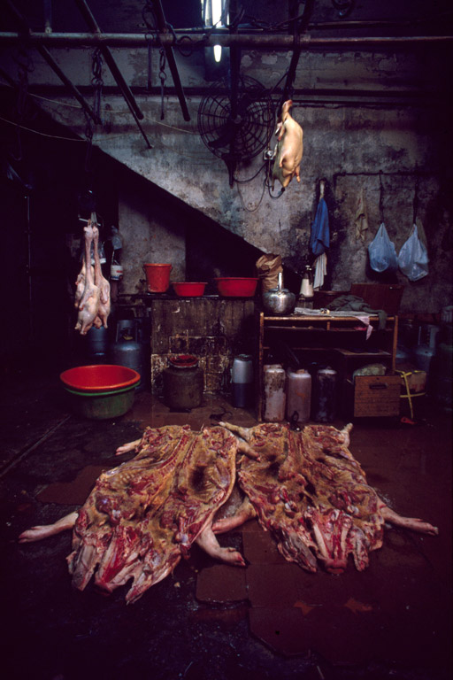 Whole pig carcasses being prepared for roasting